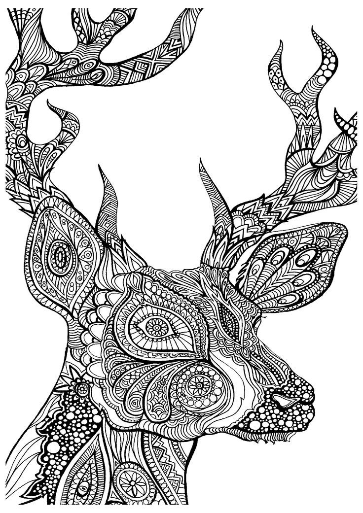 beautiful stag adult colouring zentangle: