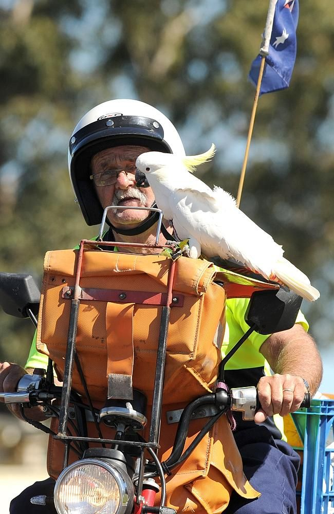 """George the Postie"" has ridden shotgun with Australia Post worker Bob Johnston since he was a six-month-old chick.  v@e."