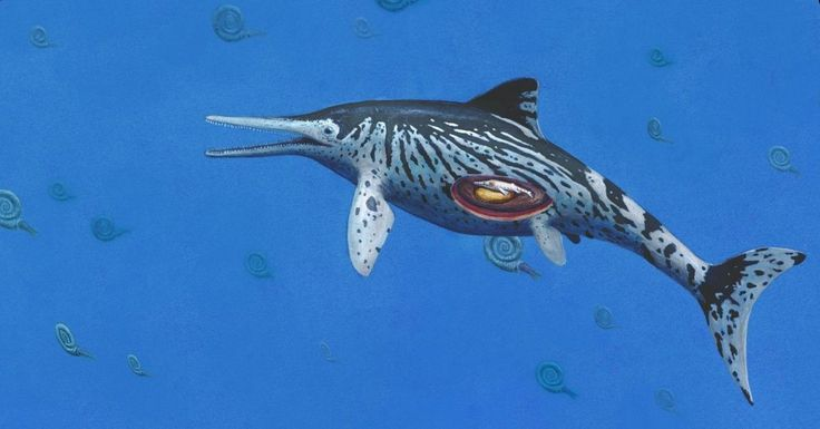 foxnewsonline@foxnews.com (Fox News Online)   The Ichthyosaurus or 'sea dragon' fossil was found in the mid-1990s but remained unstudied until recently when experts made a startling discovery. According to a press release on the American Association for the Advancement of Science (AAAS) website,... - #Dragon, #Experts, #Fossil, #Largest, #Mus, #News, #Rediscover, #Sea