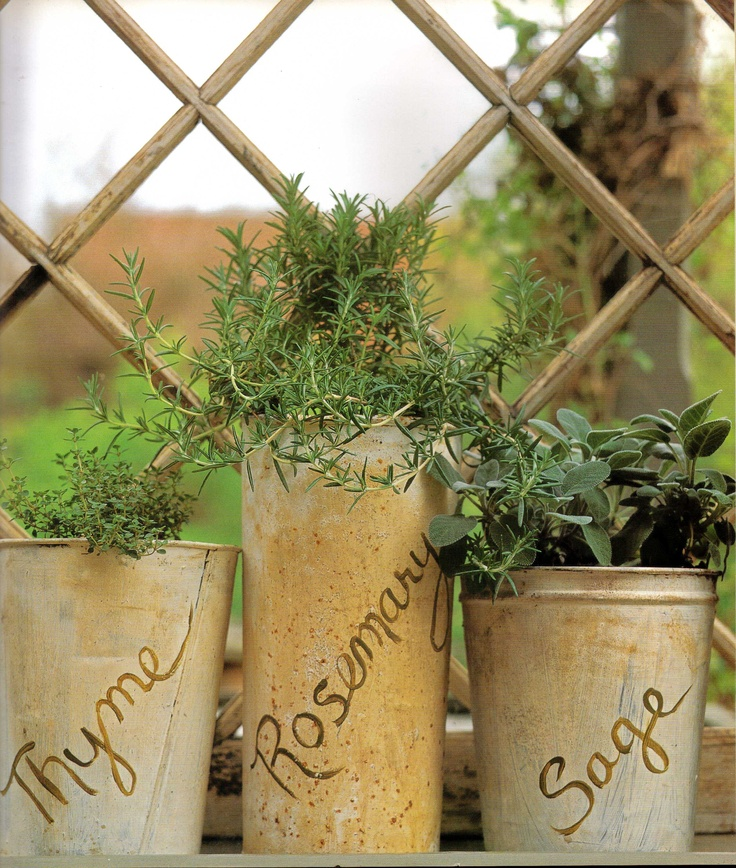 Starters for herb garden, or just keep contained in pots....
