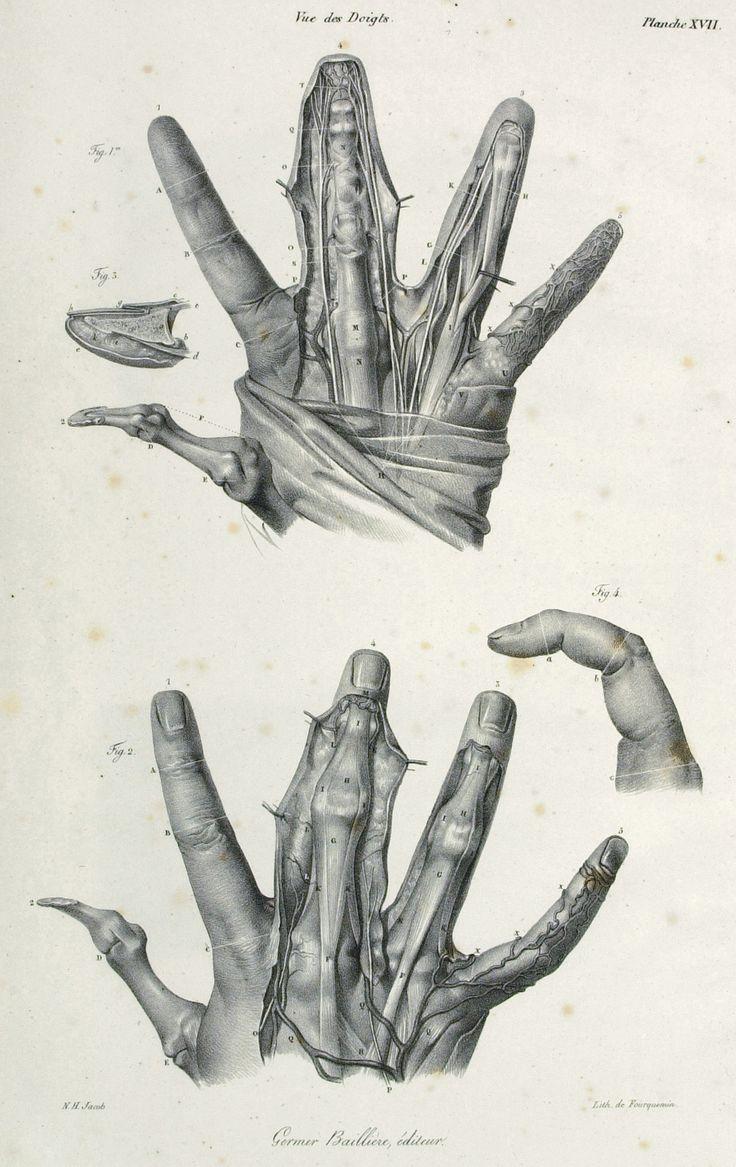 323 best estudios de la mano / hand studies images on Pinterest ...