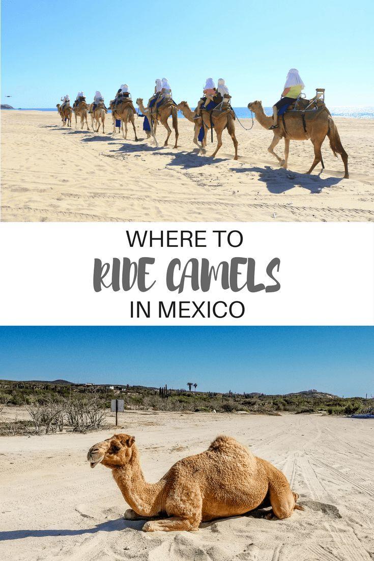 Camel Crew: An outback adventure in #Mexico's Baja Peninsula.   #Travel | #LosCabo | #Cabo | #Adventure