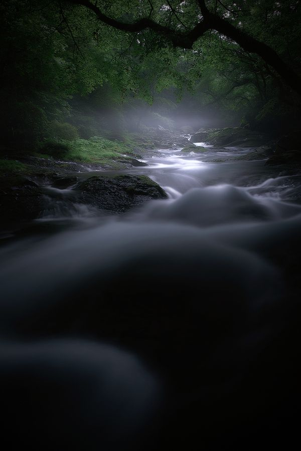 Forest of Spirits: Photos, Forests, Picture, Nature, Junya Hasegawa, Beauty, Things