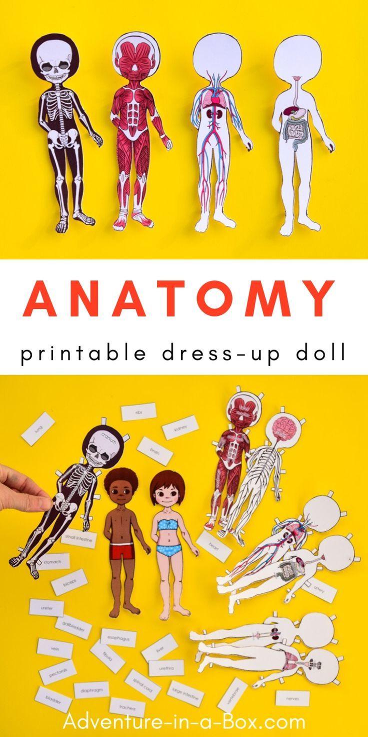 Anatomy Printable Paper Doll for Children