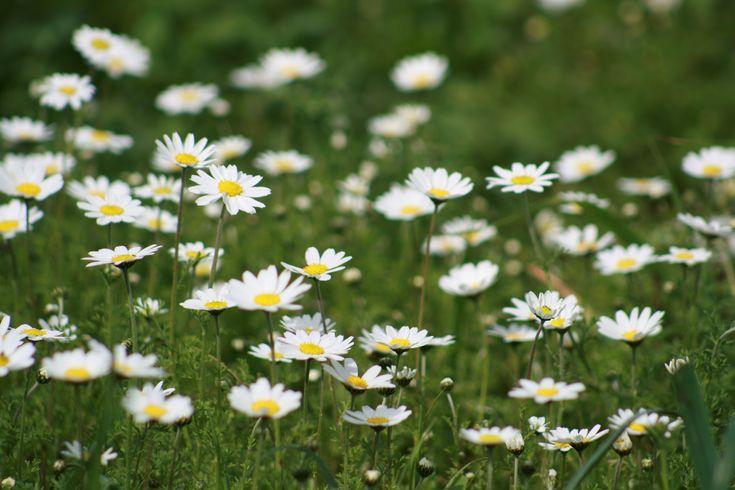 Γη και Ελευθερία.: Tα λουλούδια χαμογελούν μόνο όταν έρθει η αυγή.