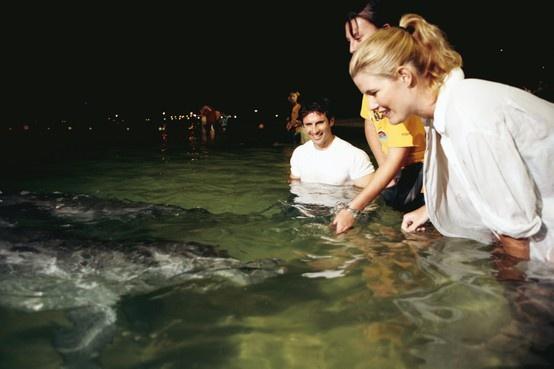 Queensland bucket list | 37. Hand feed wild dolphins on Moreton Island.