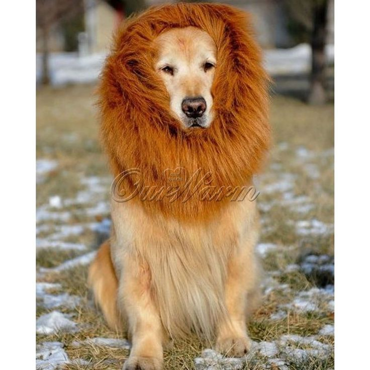 Pet Costume Lion Mane Wig For Dog Halloween Festival Fancy Dress Up Party Hat…