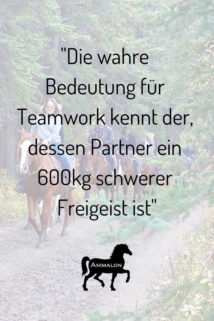 Das Pferd – der beste Teampartner ❤️ Besuchen Sie unsere Website und finden Sie die …