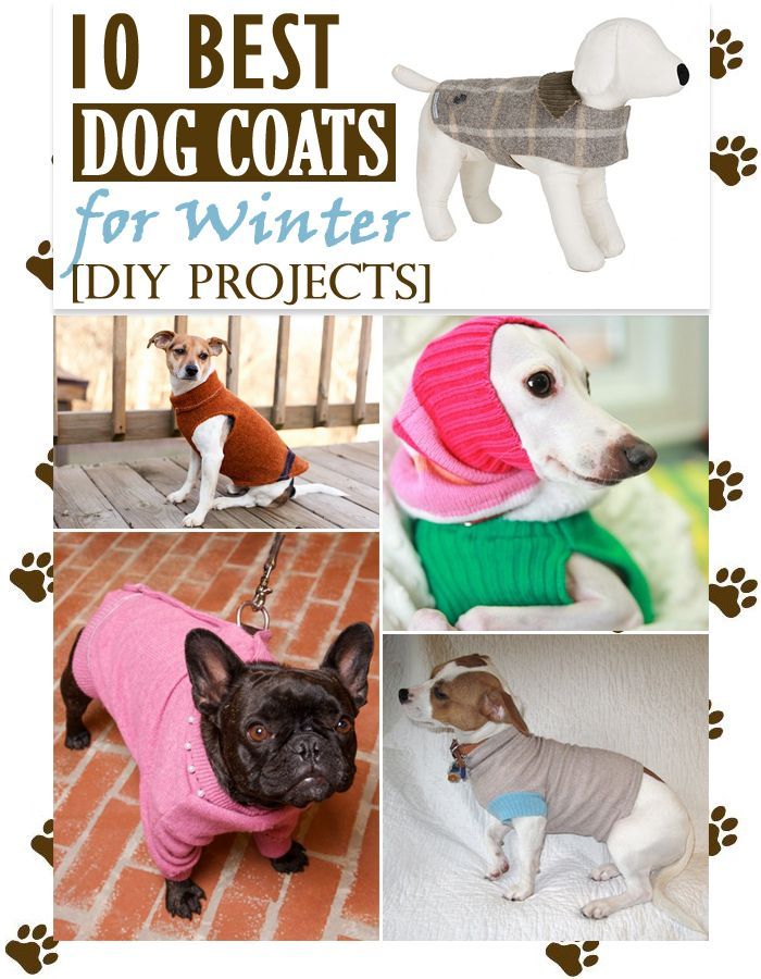 10 Best Dog Coats for Winter [DIY Projects] | Only For Her