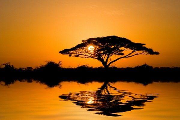 Tableau Paysage - Arbre de la Savane Africaine au Coucher de Soleil