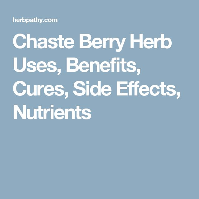 Chaste Berry Herb Uses, Benefits, Cures, Side Effects, Nutrients