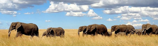 Donate for a Cause   African Wildlife Foundation