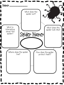 Free Download!...Spider Report and Activities