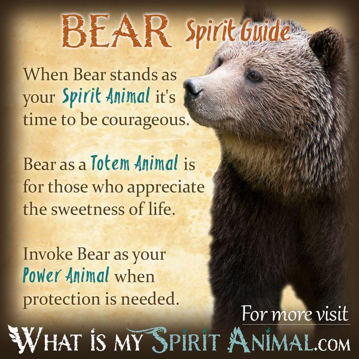 Bear Symbolism & Meaning | Spirit, Totem & Power Animal