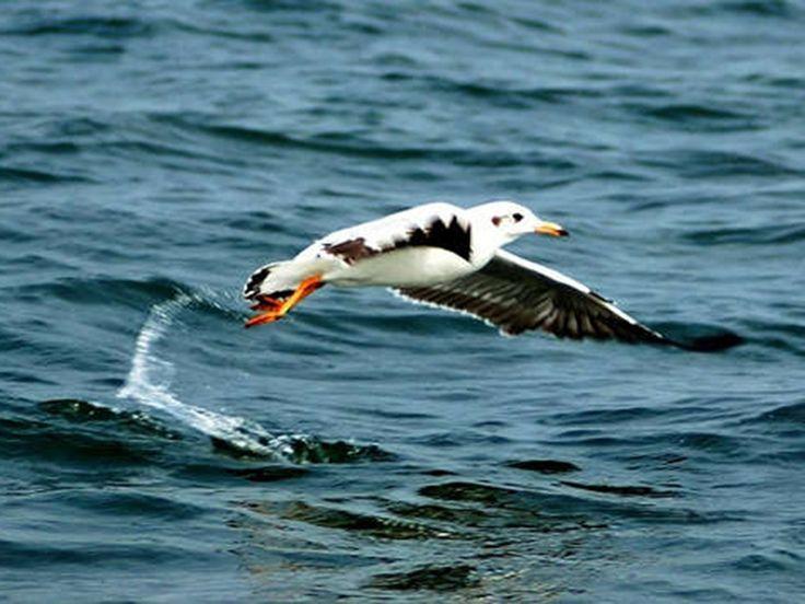 Bird Sanctuaries in Odisha, India @ Sanctuariesindia.com