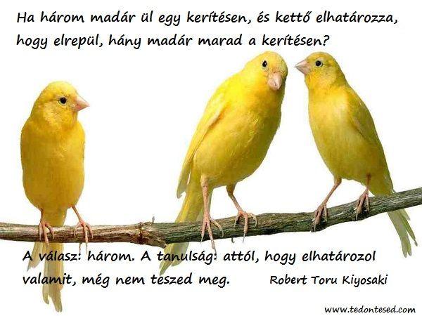 Ha három madár ül egy kerítésen, és kettő elhatározza, hogy elrepül, hány madár marad a kerítésen?  A válasz: három. A tanulság: attól, hogy elhatározol valamit, még nem teszed meg.