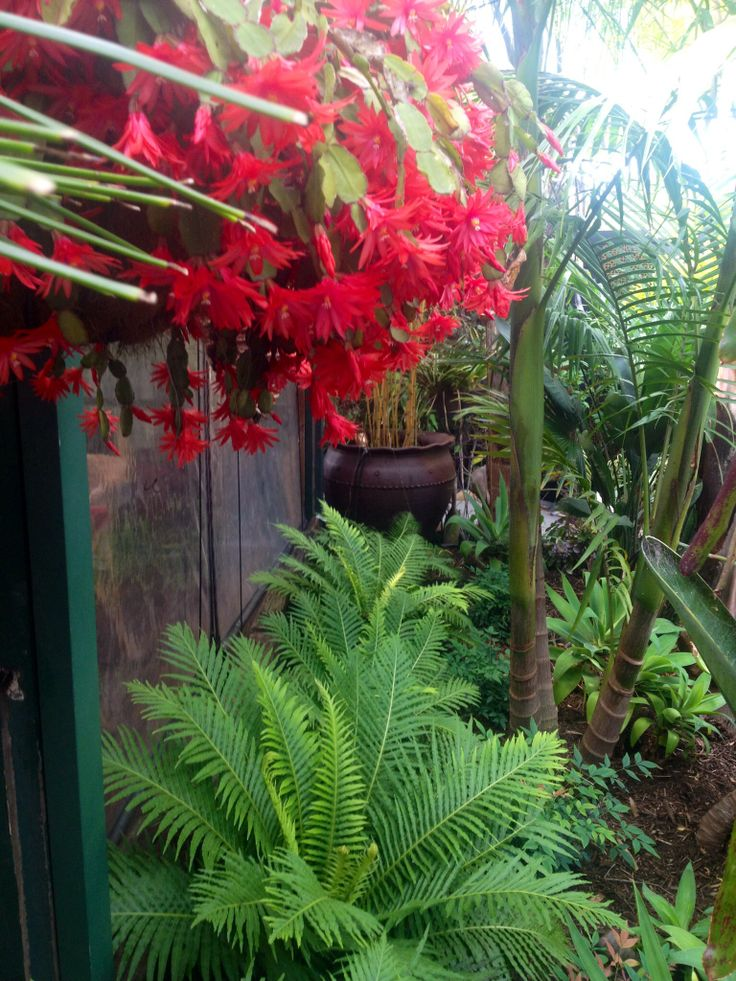 Tropical palm garden with Silver Lady Ferns