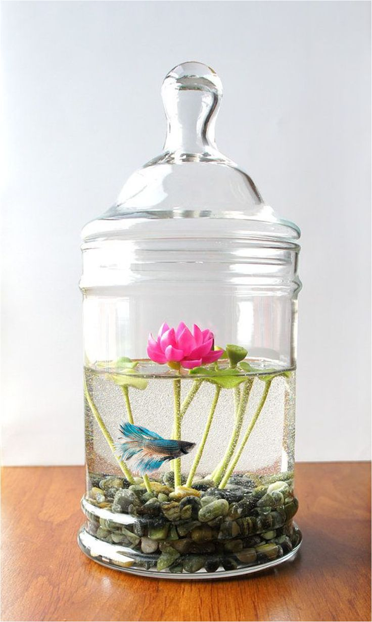 Betta/ Lotus Jar. Please no more comments- the lotus, not the tank, that I'm interested in                                                                                                                                                     More