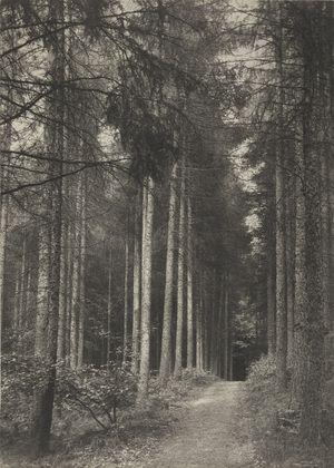 Frederick H. Evans. In Redland Woods: Surrey. 1894