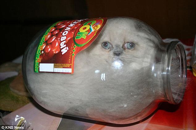 In a pickle: Ksyusha the kitten loves nothing more than a tight squeeze