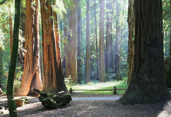 Armstrong Woods, CA: If you find yourself in the Sonoma Valley wine country north of San Francisco, do yourself a favor and take a day trip out to Guernville to visit this beautiful state park. Some of the largest and most majestic trees in the world live here. You can stop by the Korbel winery on the way too! #Redwoods