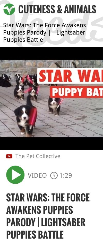 Epic Jedi Puppy Lightsaber Star Wars Battle! The Pet Collective is home to the top trending clips, most entertaining memes, and funniest animal videos online. Simply put, we think animals are the be.. | #starwars #socute | http://veeds.com/i/Smh3G23LClYORtCP/cuteness/