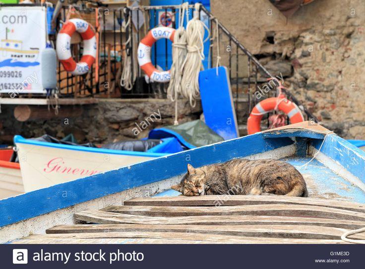 Cat Sleeping On A Boat In Riomaggiore, Cinque Terre, Liguria, Italy Stock Photo…