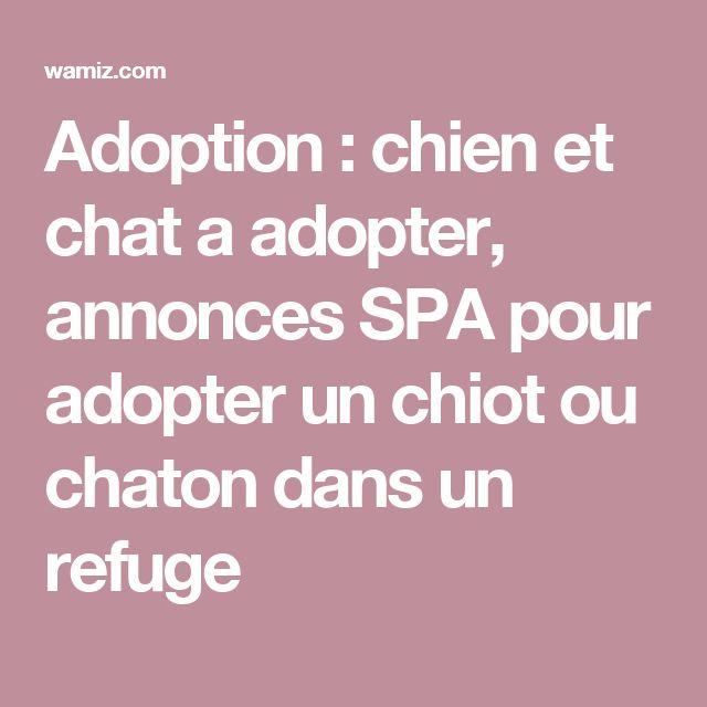 Adoption : chien et chat a adopter, annonces SPA pour adopter un chiot ou chaton dans un refuge