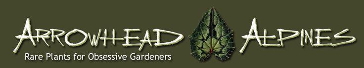 Search Results : Arrowhead Alpines