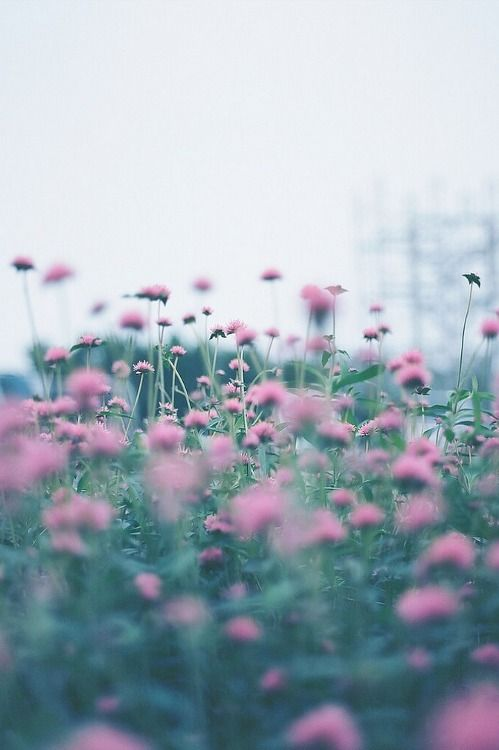 maarimessina:  Piccsy :: Photo on We Heart It - http://weheartit.com/entry/52032734/via/Maruuuuuu