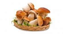 mushrooms nutrition
