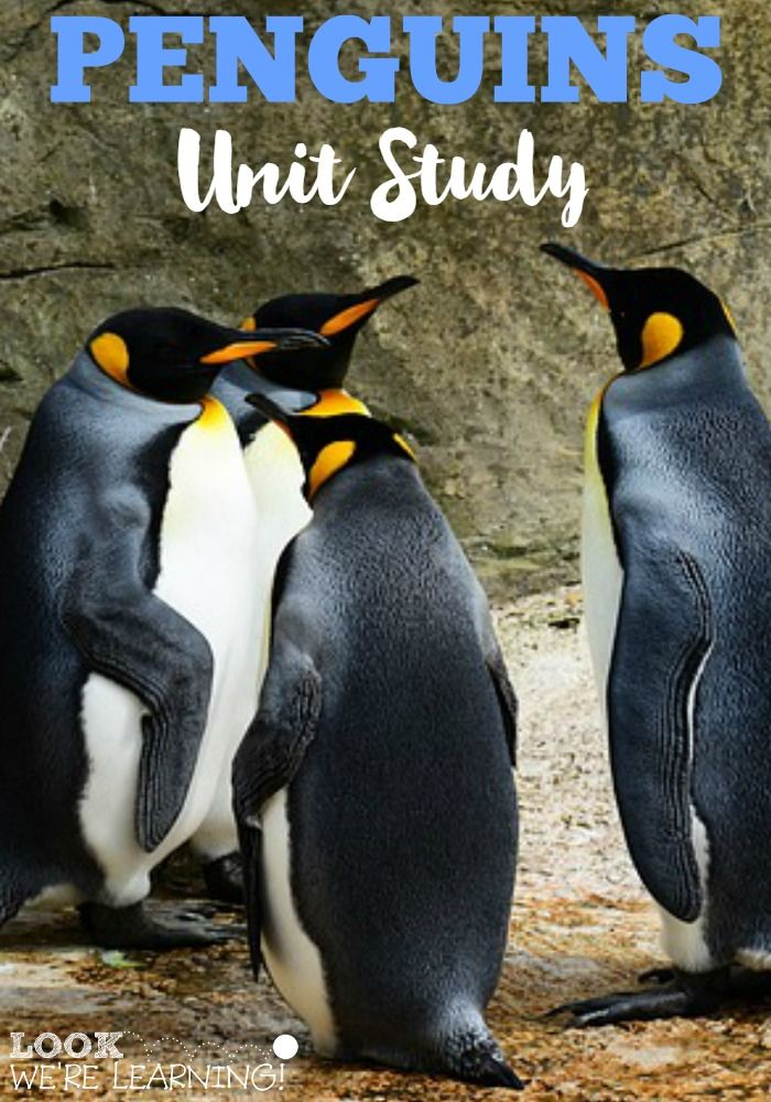 a study of the penguin These 10 easy tips will help you learn to study better and be more effective in school.