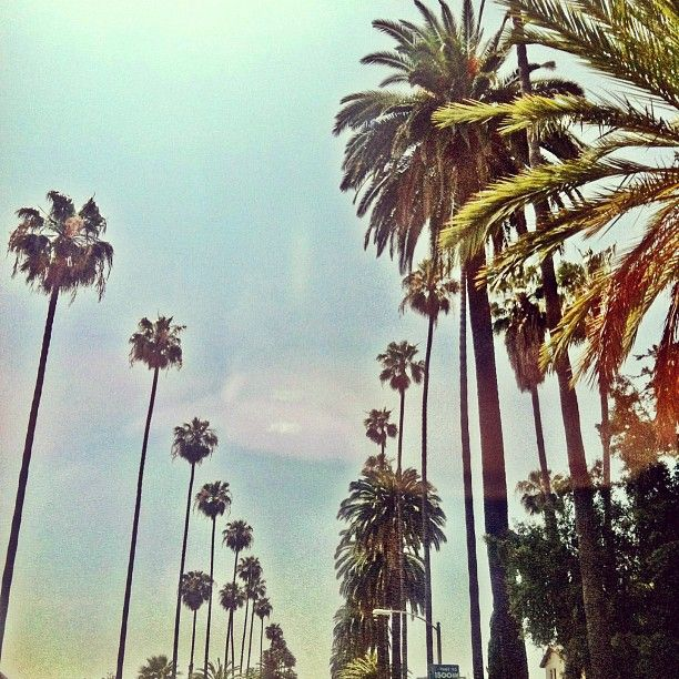 good morning, los angelesFavorite Places, Paradis Places, California, Mornings La, Losangeles, Palms Trees, Cities Of Angels, Places To Go, Los Angels