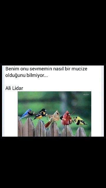 Benim onu sevmemin nasıl bir mucize olduğunu bilmiyor.. Ali Lidar