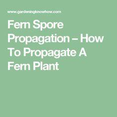 Fern Spore Propagation – How To Propagate A Fern Plant