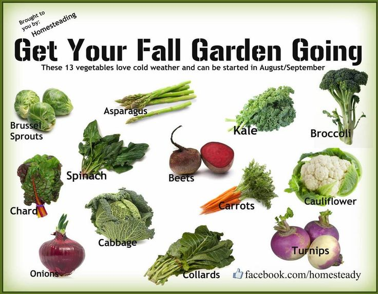 Nice Fall Vegetable Garden Ideas Part - 2: Vegetables To Plant In August/September