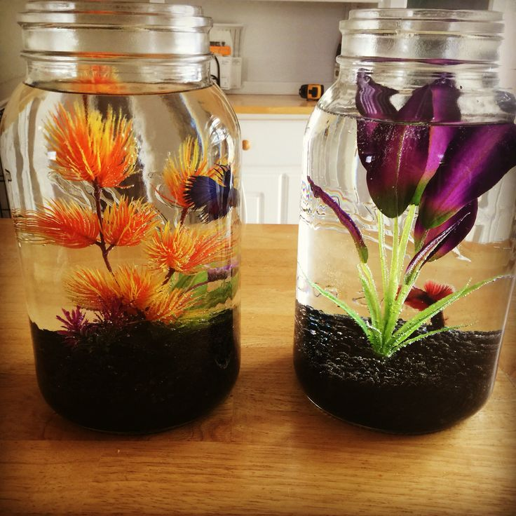 25 best ideas about cool fish on pinterest pretty fish for Cool betta fish tanks