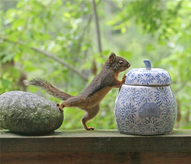GYM 4/9Funny Animal Pictures, Funnyanimal, Funny Squirrels, Pets Photos, Chipmunks, Places, Rocks, Pets Photography, Cookies Jars