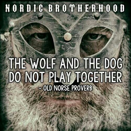 ... Old Norse Proverb ... Wolves are aggressive pack animals who work together for common benefit. Any wolf who works against his pack is cast out. Dogs are pets, whose alliances shift, and whose loyalty is to their master, bought with treats and kind words, or demanded with a stick. A wolf without a pack is nothing but a feral dog, wanted by none.