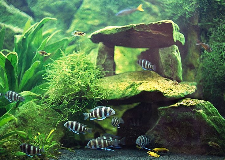 Cool tank setup with java moss for your betta.  (Add salt at a rate of:  1Tbsp per 5 gallon/There are 3 teaspoons in 1 tablespoon.)  So only add about a 1/2 - 3/4 teaspoon per gallon, 1/4 teaspoon for a small tank or bowl.  This will prevent numerous diseases.  I was surprised to find that many of the treatments for Betta ailments involved a salt bath.  Adding a small amount of salt at each cleaning will prevent many of these conditions. Salt can kill some plants.