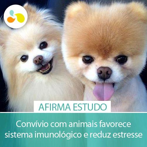 Você sabia que os animais trazem benefícios à saúde humana? http://maisequilibrio.com.br/animais-trazem-beneficios-a-saude-humana-5-1-4-320.html