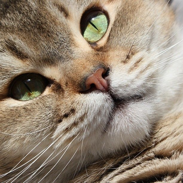 (Video) How to Prevent your Cat from Spraying