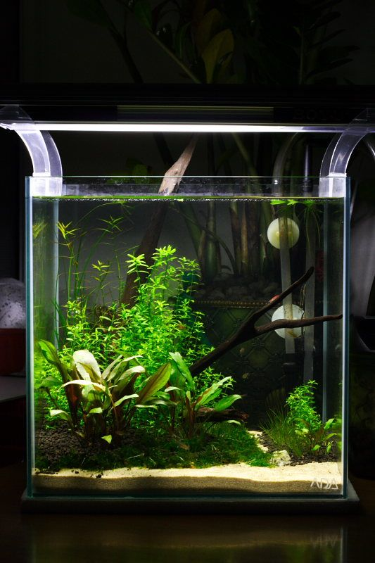 1ft cube non co2 planted aquascape aquarium fish tank for Co2 fish tank