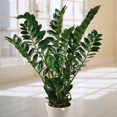 Welche Zimmerpflanzen brauchen wenig Licht? Folgende Topfpflanzen sind pflegeleicht und benötigen keine besondere Pflege oder einen speziellen Standort...