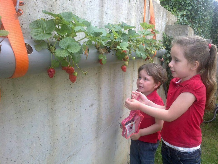 Verticle Gardening using pipes