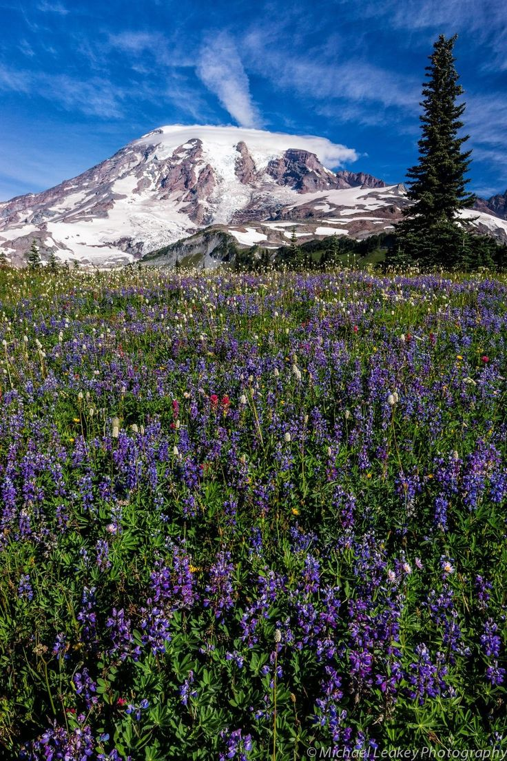 Here's to the most colorful flowers across America and amazing nature filled spring trips