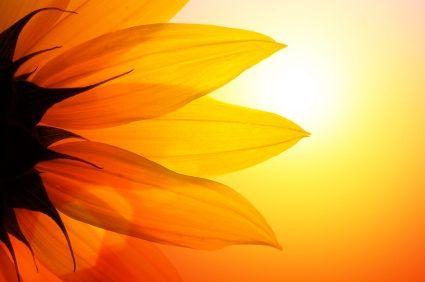 SunflowerPhotos, Orange, Mary Mary, Mothers Mary, Sunflowers, Sun Flower, Louis Hay, Summer Solstice, Self Esteem Quotes