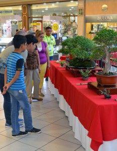 Exposición y venta de bonsáis para celebrar a mamá