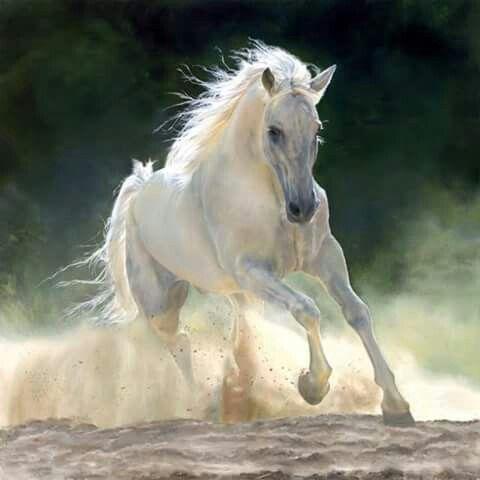 Pohyb, síla, elegance...