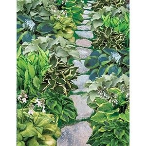 Shady Spaces for Hosta Garden.  7 Hosta Varieties, total of 15 Hosta roots by carlasisters